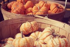 Autumn 2013 (ohgoodgracious) Tags: autumn orange fall pumpkin newjersey october farmersmarket pumpkins nj gourd squash produce autumnal wintersquash buylocal farmfresh ramseynj minipumpkins jackbelittle autumnproduce autumnsquash jackbelittles ramseyfarmersmarket