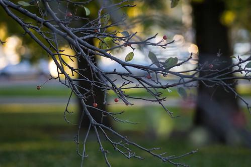 Fall, close up
