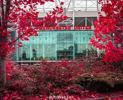 Natural Red, Old Trafford (0-1-6-1) Tags: england manchester football soccer oldtrafford cristianoronaldo davidbeckham epl ericcantona georgebest alexferguson davidmoyes