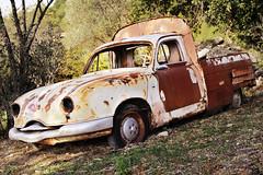 Rostende Schönheit! (Max Grieger) Tags: auto lost place alt citroen pickup provence rost wald peugeot herby steineiche alleine rustikal