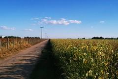 SENDEROS DEL SEMBRADOR !!!! (su-sa-ni-ta) Tags: argentina flickr noviembre caminos cielo nubes cordoba hoy cosecha today campos siembra sembrado