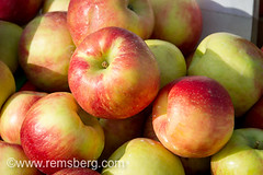 Close-up of apples at the Waverly Farmers Market in Baltimore, Maryland. (Remsberg Photos) Tags: food usa fruit healthy farmersmarket market sale maryland baltimore fresh delicious pile apples vendor produce vitamins csa foodvendor nutritious