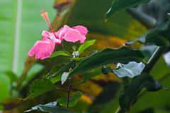 Maui, Hawaii (ChristyB30) Tags: flowers green hawaii maui hana dolphins whales roadtohana