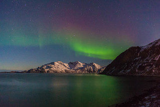 grotfjord (shooting star)
