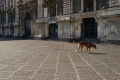 pomeriggio giorno da cani (ADRIANO ART FOR PASSION) Tags: italy d50 nikon catania sicilia dogdayafternoon ringexcellence unpomeriggiodiungiornodacane