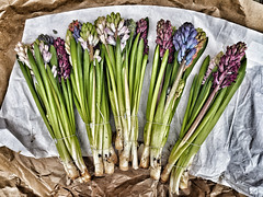Spring is nearly here..... (Tog66) Tags: flowers bunch 17mm penf pen olympus hyacinth