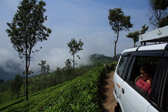 IMG_4381 (dr.subhadeep mondal's photography) Tags: tea estate travel photography people landscape coonoor ooty car cab green tree plantation india south tamilnadu tourism tour canon 1755mm 1000d subhadeepmondalphotography