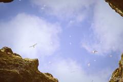 Rauðfeldsgjá Gorge (Crisbina) Tags: islanda reykjavík snow sea ocean neve ghiaccio ice panorama landscape natura nature fire fuoco acqua terra aria birds auroraboreale northerlighs uccelli scogliera