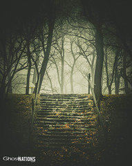 Stairs To Nowhere (Ghost Of Nations Photography And Digital Art) Tags: ghostofnationsphotography ghostofnations gloomy gothic newgothic neogothic trees tree steps stones stone woods forest dark eerie spooky fog foggy
