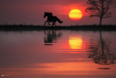 Run free... (Kerriemeister) Tags: horse running tree silhouette silhouettes grass reflection reflected sun sky water digital art composite imagination fantasy photomanipulation mist dreamlike sunrise