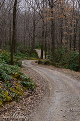 Winding Road (briankloock) Tags: winding road forbes state forest park back country driving offroad