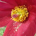 Pollen... thumbnail