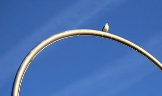 arch bird