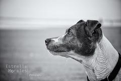 Odie (trellitaitaita) Tags: portrait perro byn viernes playa juego libre funny wildlife free elpalmar monocromo magic modelo nikonworld nikond7200 cadiz dogs d7200 crazy beach blanco sunset u