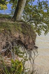 Cliff hanger (BIngo Schwanitz) Tags: 2016 aareiserügen2016 bingoschwanitz bingos d7000 jasmund kleinestubbenkammer kreidefelsen nationalparkjasmund nikon nikond7000 ostsee outdoor rügen sigma sigma1750mmf28exdcoshsm stubbenkammer
