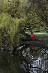 Amsterdam (vjbender) Tags: amsterdam frühling vondelpark bäume spiegelung regenschirm rot