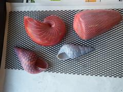A new set of 3D printed seashells (fdecomite) Tags: 3d print seashell algorithm meinhardt nath geometry