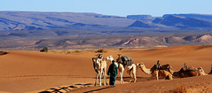 Enjoy Morocco Desert Tours To Get The Exciting Charm In Morocco (camelsafarie) Tags: morocco desert tours