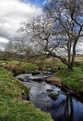 Padley gorge. (S.K.1963) Tags: elements padley gorge derbyshire peak district england stream moors olympus omd em1 12 40mm pro