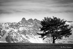 Pick & pine (BW version) (Pierrotg2g) Tags: montagne mountain nature paysage landscape alpes alps alpi belledonne dauphiné isère nb bw arbre tree neige snow nikon d90 tamron 70200