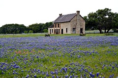 The Bluebonnet House. (The Old Texan) Tags: bluebonnets historichouse texas