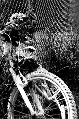 Ghost bike in memory of a 20 year old student hit by a drunk driver. (orlandotrejo@ymail.com) Tags: tragedy bike black white blackandwhite ghostbike ghost flowers death memory portrait
