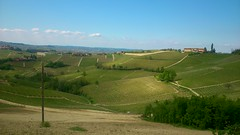 Langhe (only_sepp) Tags: langhe vigneti verde campi piemonte allnaturesparadise