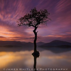 Loch Lomond Isolation (James Whitlock Photography) Tags: europe scotland loch lomond milarrochy balmaha water reflection sunset sun tree cloud sky fire winter