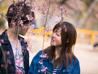 Young couple looking at each other in cherry blossoms