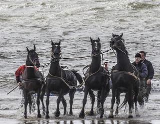 Paardenreddingsboot - 050_Web