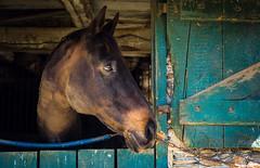 - (Jen MacNeill) Tags: warmblood farm horse watermarkfarm equine barn window