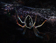 and more! (conall..) Tags: 041015 manipulated manipulatedimage photoshop elements 15 messing abstract weird glowing edges spider web raynox dcr250 macro closeup backlit backlight intothelight