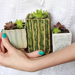 IMG_4804 (threesnails.Ukraine) Tags: pots flowers home succulents