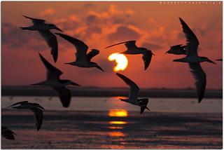 Skimmer Sunset