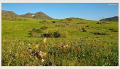 Fugaz primavera (Sierra de Gata - Almería) (Jose Manuel Cano) Tags: almería sierradegata cabodegata españa spain paisaje landscape flor flower verde green color colour nikond5100 mountain