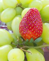 strawberry and green (Leonard J Matthews) Tags: strawberry grape vine nature food fruit creation red green mythoto australia colour colourful