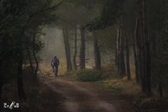 The Biker (Renate van den Boom) Tags: 04april 2017 boom bos europa gelderland jaar landschap maand natuur nederland renatevandenboom veluwezoom