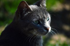 Cat (5ra155) Tags: cat animal garden nikon d3200 nikkor nikkor70210mm f4556 nikond3200nikkor70210mmf4556