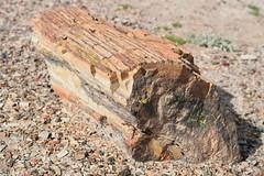 DSC_0247_1375 (thokaty) Tags: petrifiedforest nationalpark arizona holbrook roadtrip petrifiedwood route66
