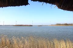 DSC07268 (imanh) Tags: riet meer uitzicht imanh iman heijboer reed lake view