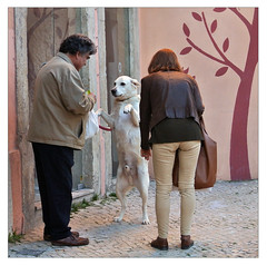 ....croissant? (me*voilà) Tags: lisbon streetphotography people couple dog breakfast