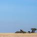 The Plains of the Serengeti