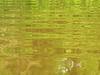 Green light (Alveart) Tags: amazonas selva jungle southamerica amazonbasin theamazon suramerica latinamerica latinoamerica alveart luisalveart selvainundable invierno naturaleza zacambu reservazacambu peru reservanaturalzacambuamazonas