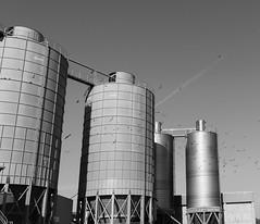 Silver (maxdid) Tags: supershot birds sky circularshape geometric bnwphotography garbage italy pier ortona port silver bnw silos