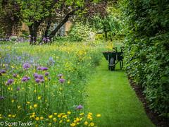 Garden (Scrufftie) Tags: uk england canon unitedkingdom oxford lightroom4 canonpowershotg15
