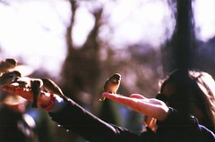 feeding birds (omnia_mutantur) Tags: paris france nature birds animals fauna hands mani natura manos uccelli mans pajaros francia animali notredamedeparis oiseaux parigi ledelacit uccellini squarejeanxxiii passeri