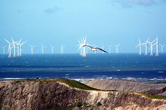 Fly past (billnbenj) Tags: seagull bank turbine barrow windturbine windfarm irishsea slagbank