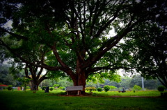 DSC_0330 (Ashok Photography) Tags: part cubbon