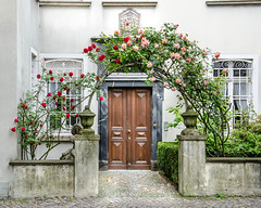 Please, come in! (Glotzmeister) Tags: door roses entrance rosen thorns dsseldorf tr kaiserswerth nikond7000 jrgenschillat