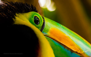 The Tucan is watching you